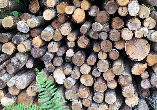 Bois de chauffage chêne ou chataigner