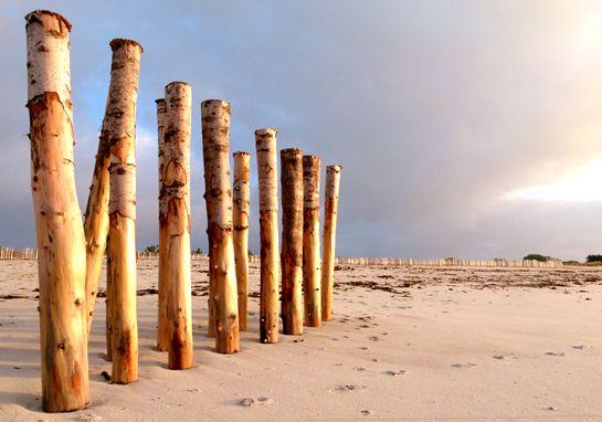 Pieux de dune